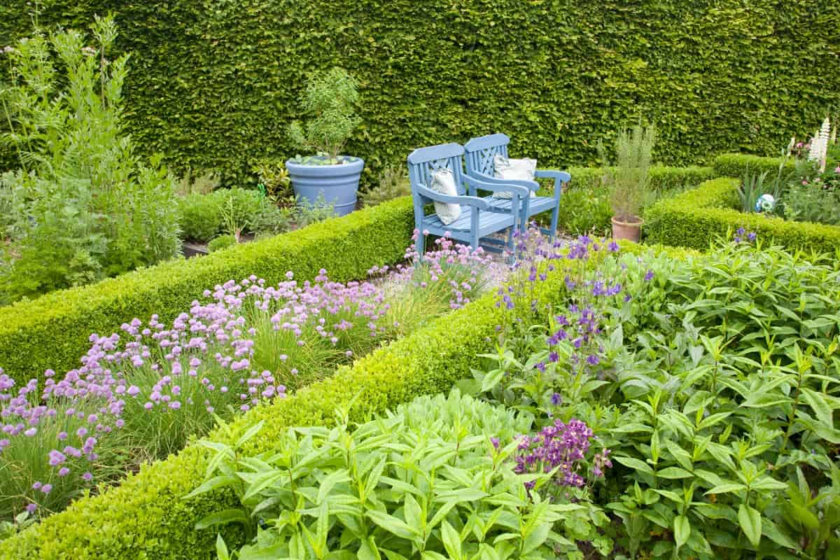 Knot garden with outdoor blue chairs