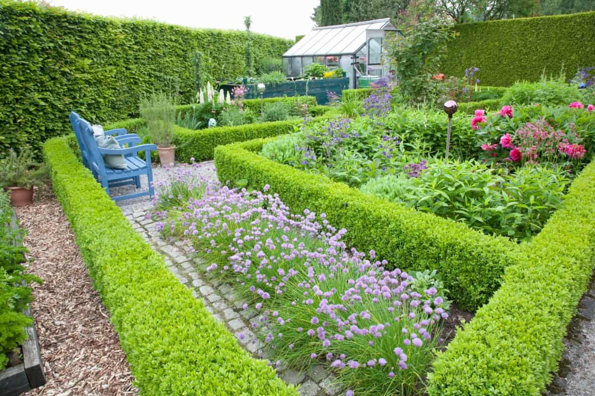 Cottage style knot garden