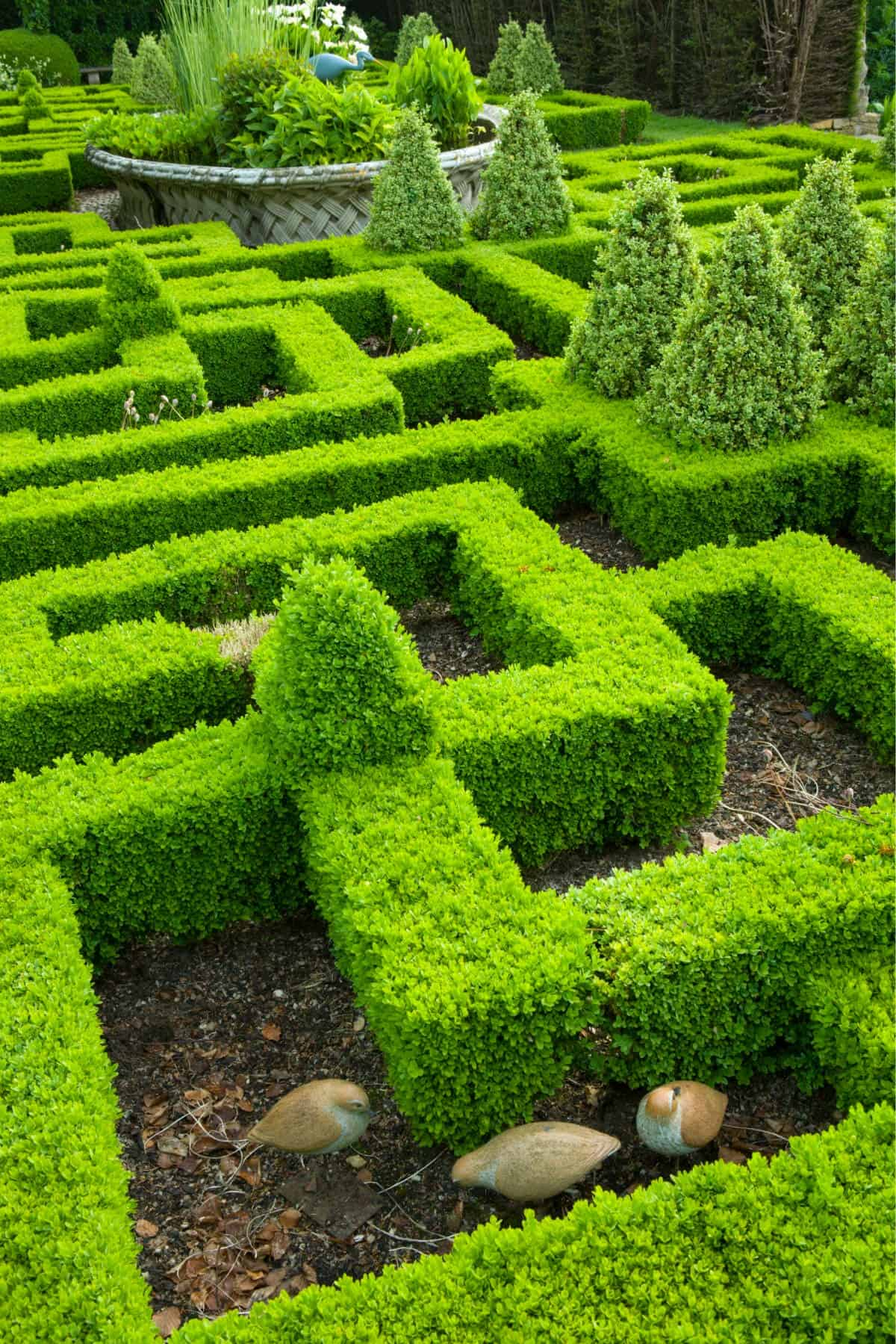 Maze-style boxwood knot garden