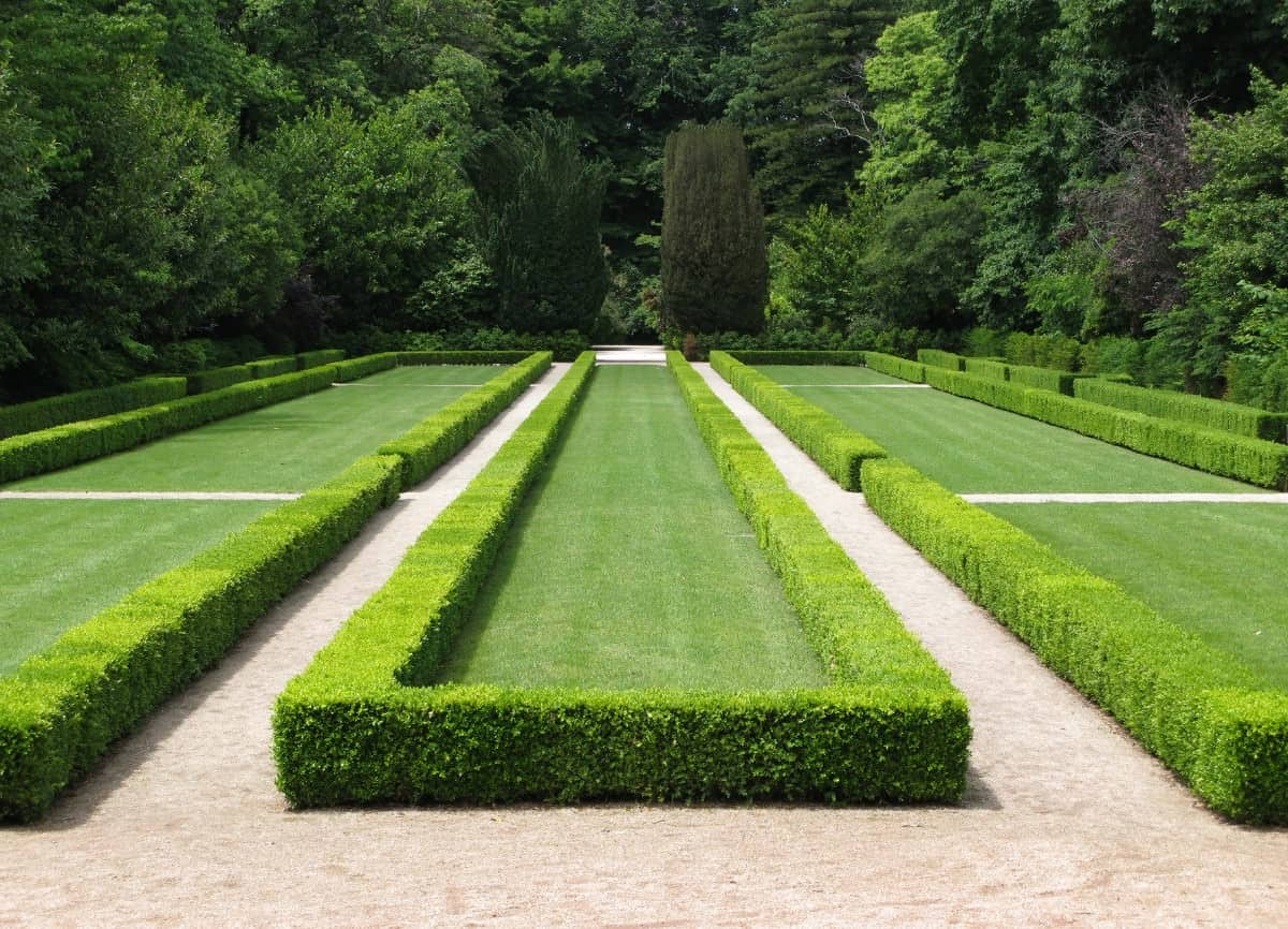 Long strips of lawn bordered with boxwood hedge
