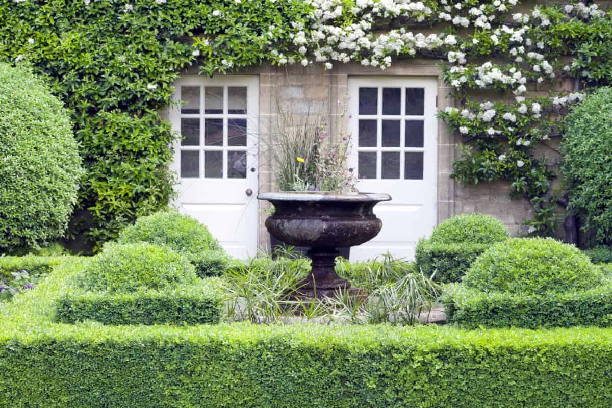 Lush garden with boxwood hedge outside small cottage