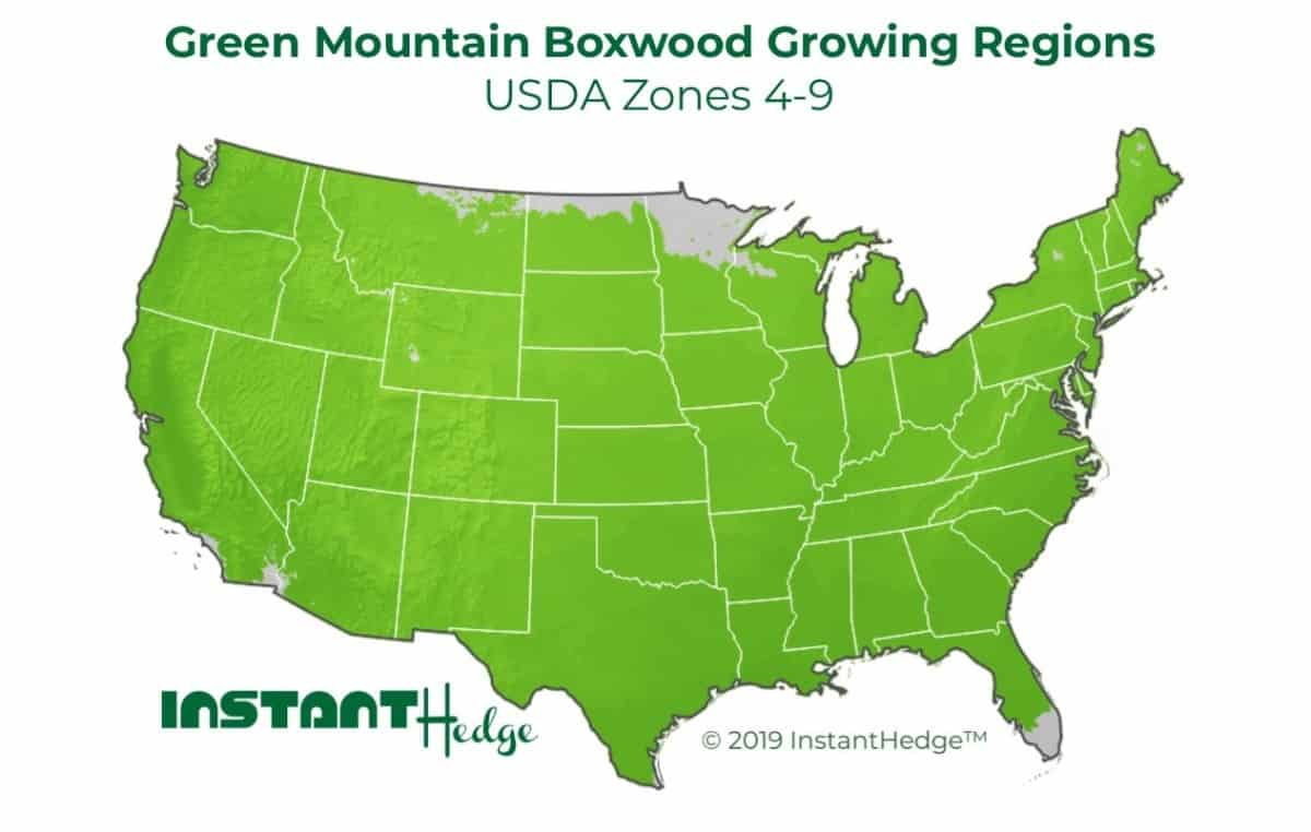 Green Mountain Boxwood Growing Regions - USDA Zones 4-9