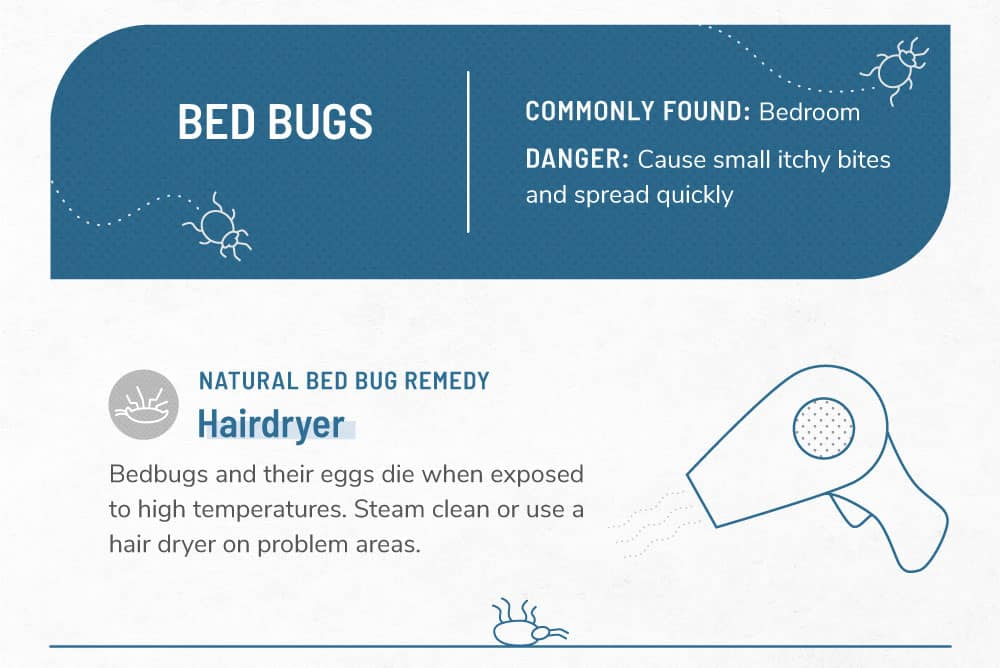 An infographic image about bed bugs.