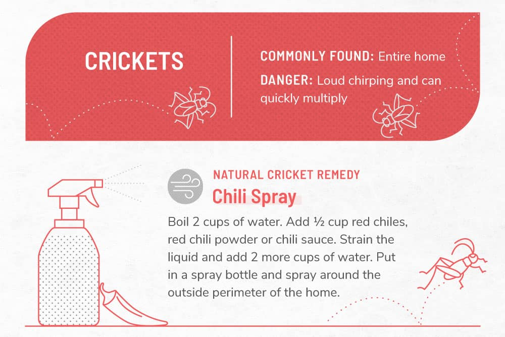 An infographic image about crickets.