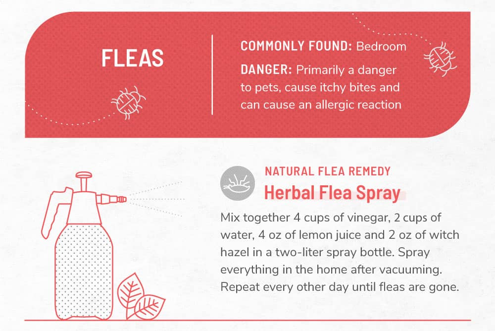 An infographic image about fleas.