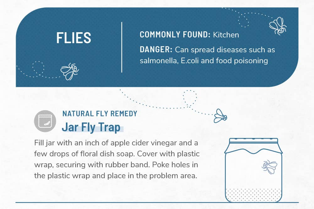 An infographic image about flies.