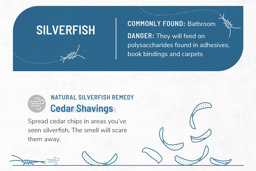 An infographic image about silverfish.