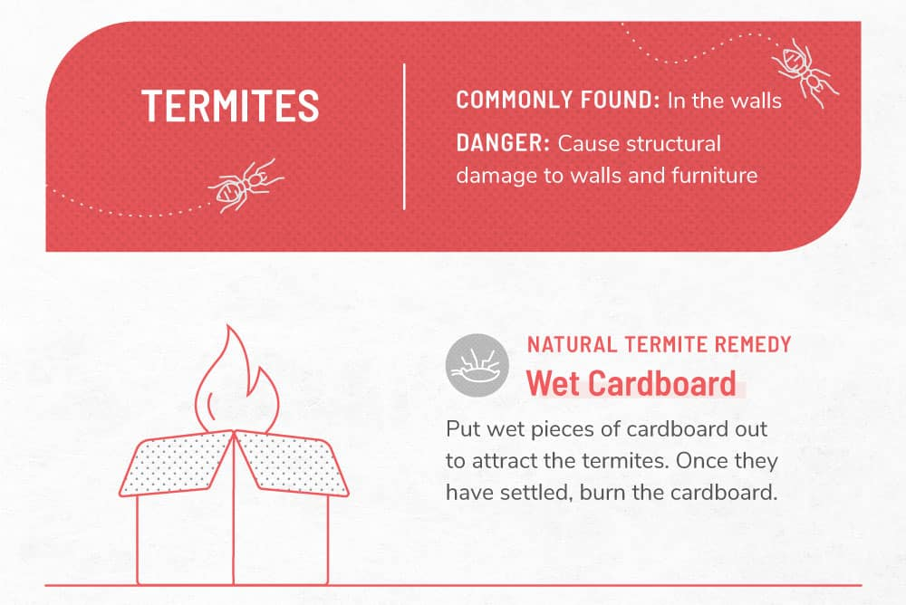 An infographic image about termites.