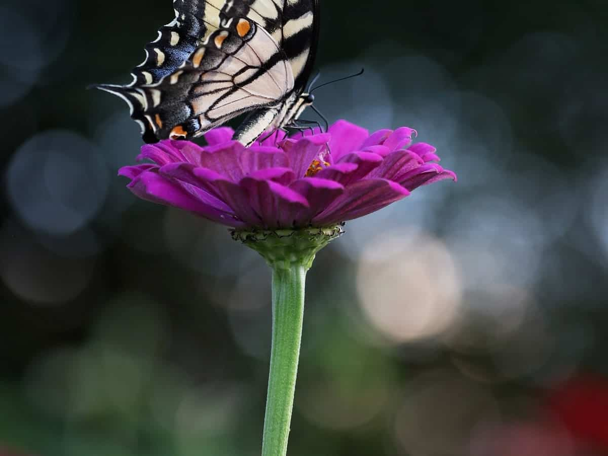 A beautiful butterfly on a purple flower.