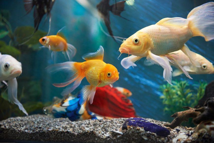 Different aquarium fish