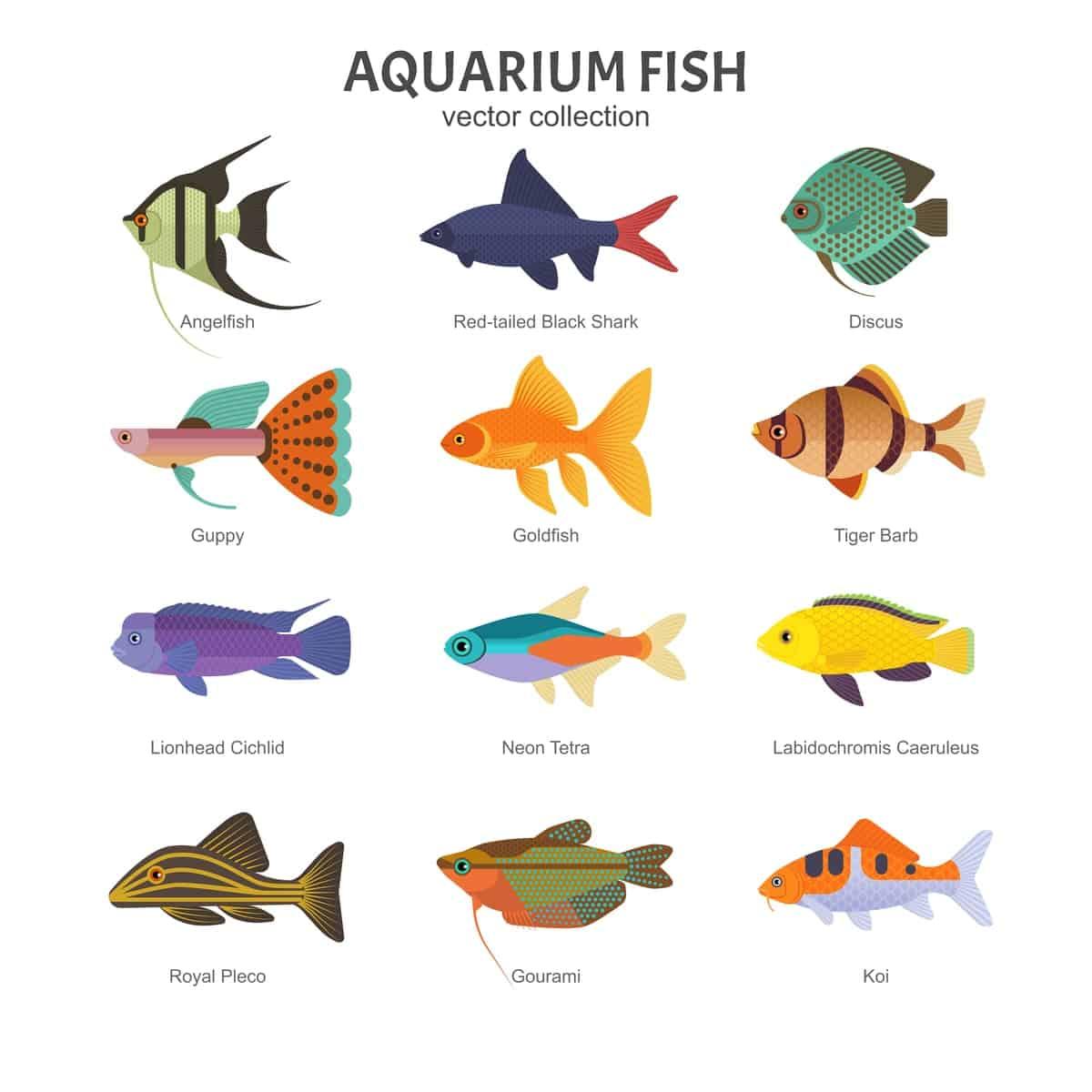 Illustrated chart setting types of aquarium fish