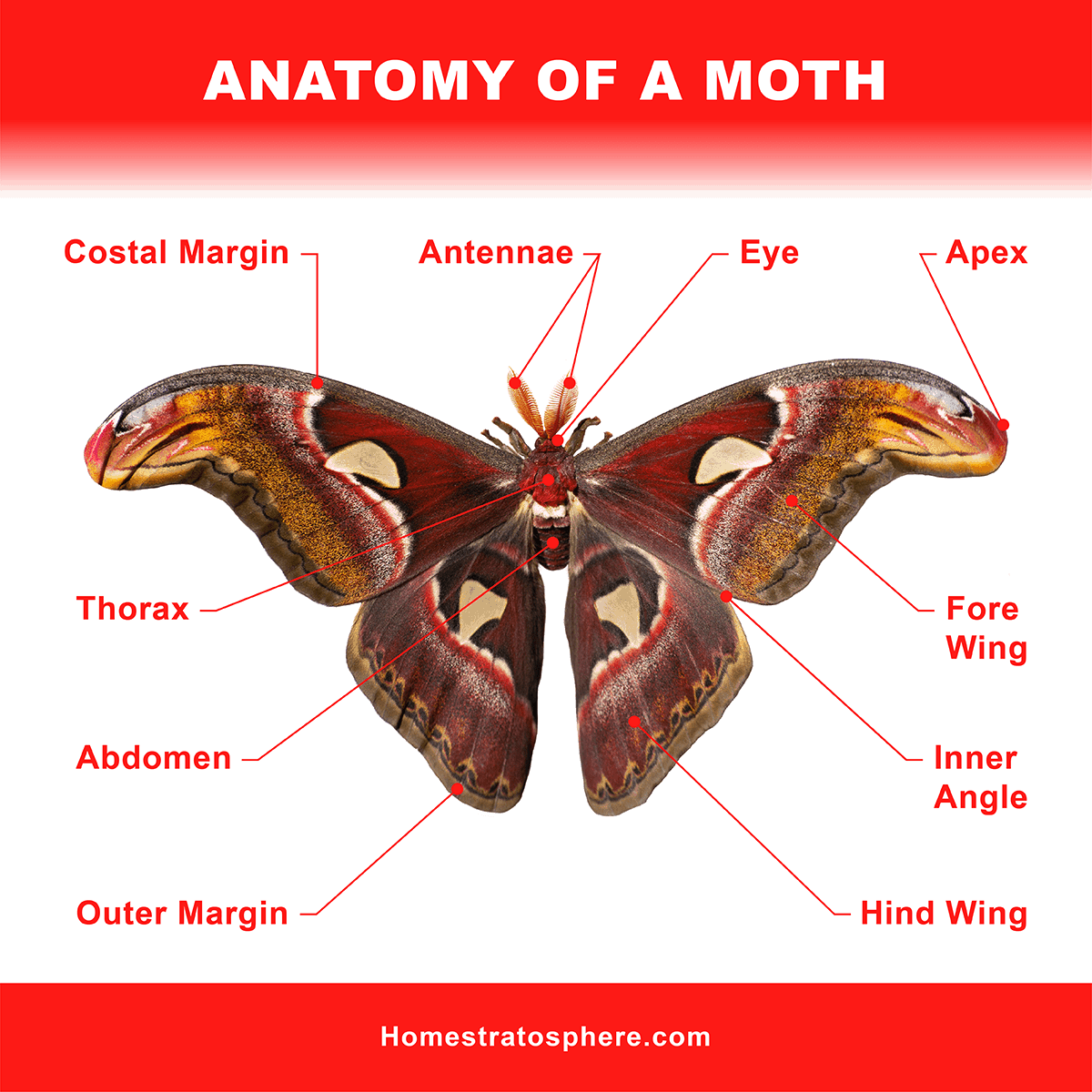 Anatomy of a Moth