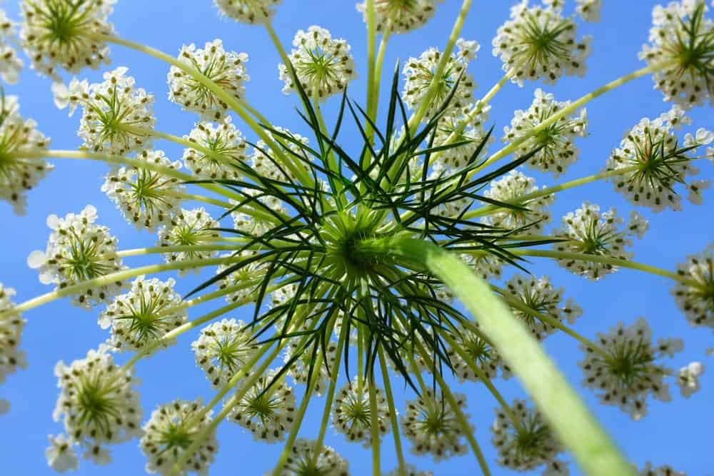 Bird's nest flowers