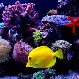 Beautiful fish aquarium in the home