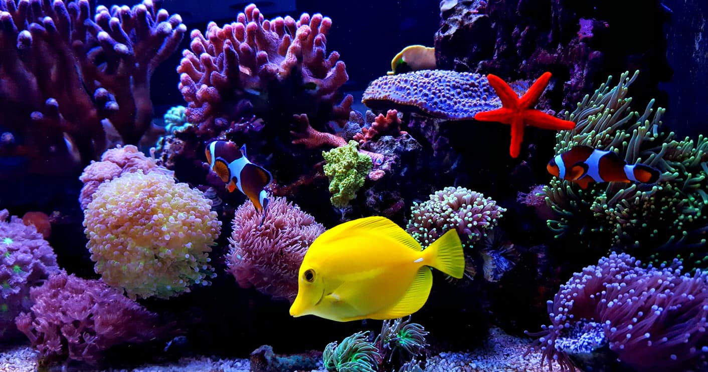 Beautiful fish aquarium in the home