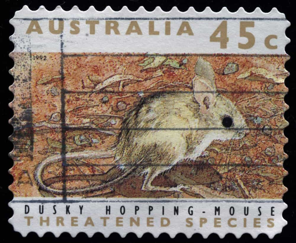 A hopping-mouse on an Australian postage stamp