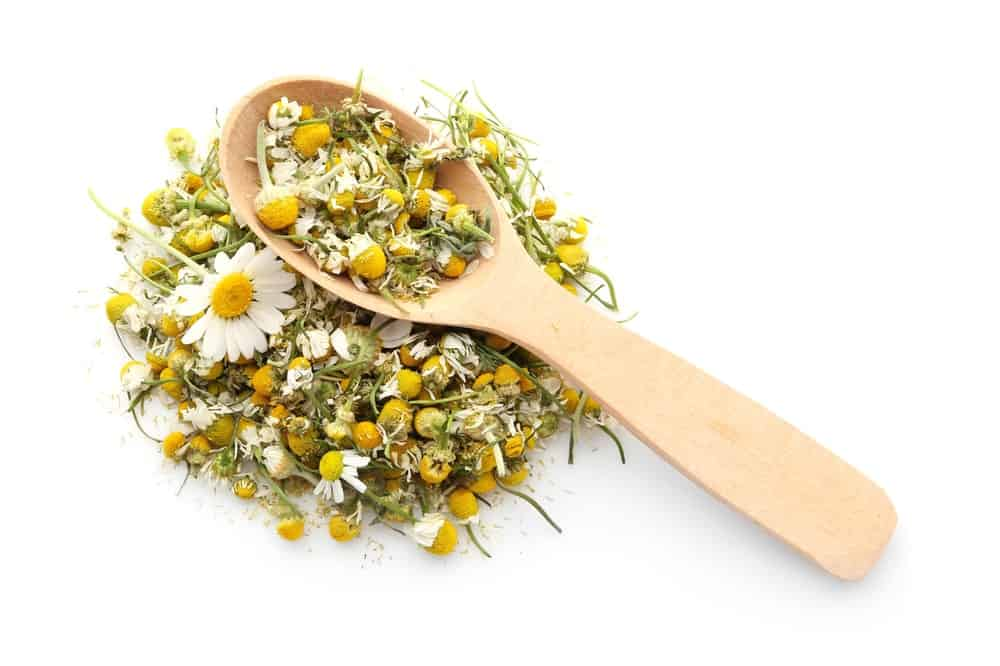 Chamomile Flowers on a Wooden Spoon