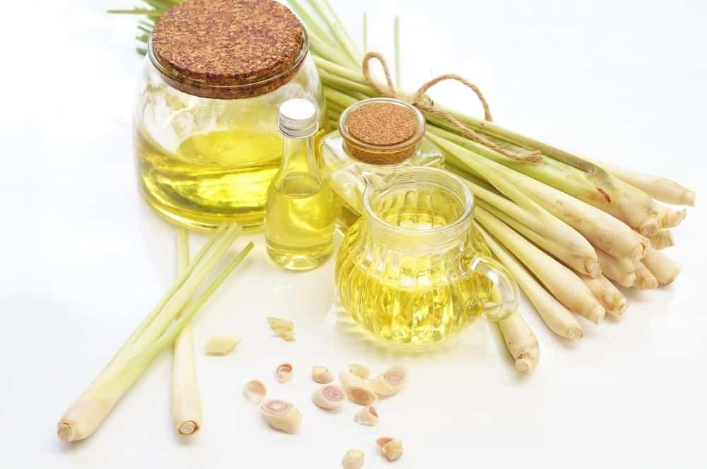 Lemongrass Essential oil with Fresh Lemongrass