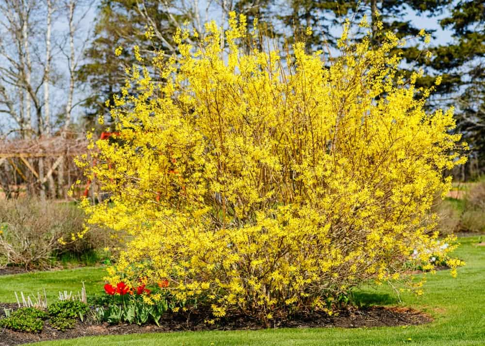 Bright Yellow Flowers in a Garden