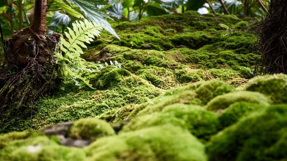 Lush green moss