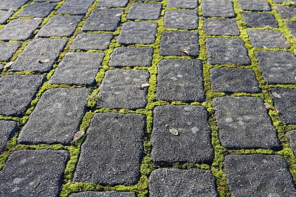 Moss in a stone garden path