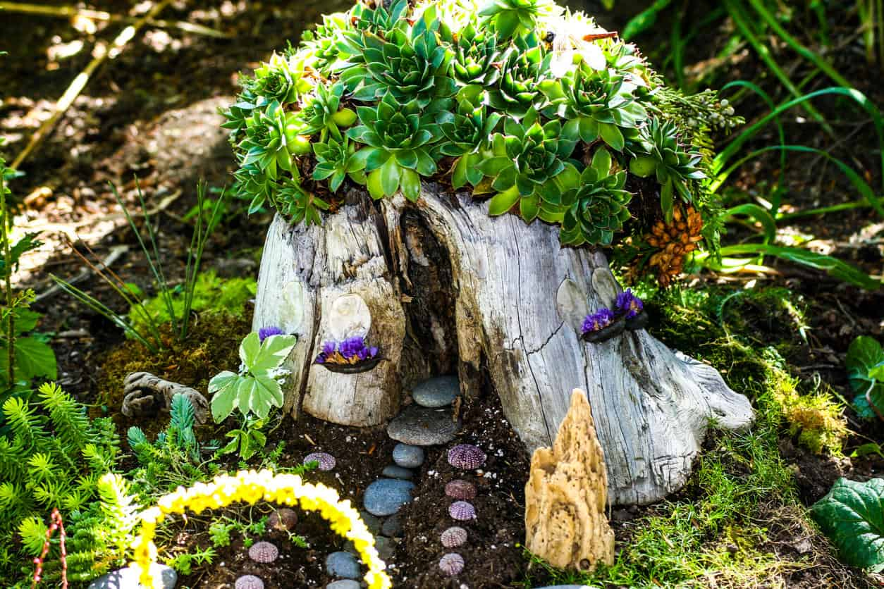 A fairy house or fairyhouse built into a tree stump and covered with green succulents.