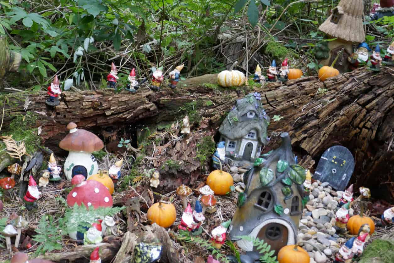 Large fairy garden in and around a large log. Includes several houses, pumpkins, mushrooms and many miniature garden gnomes.