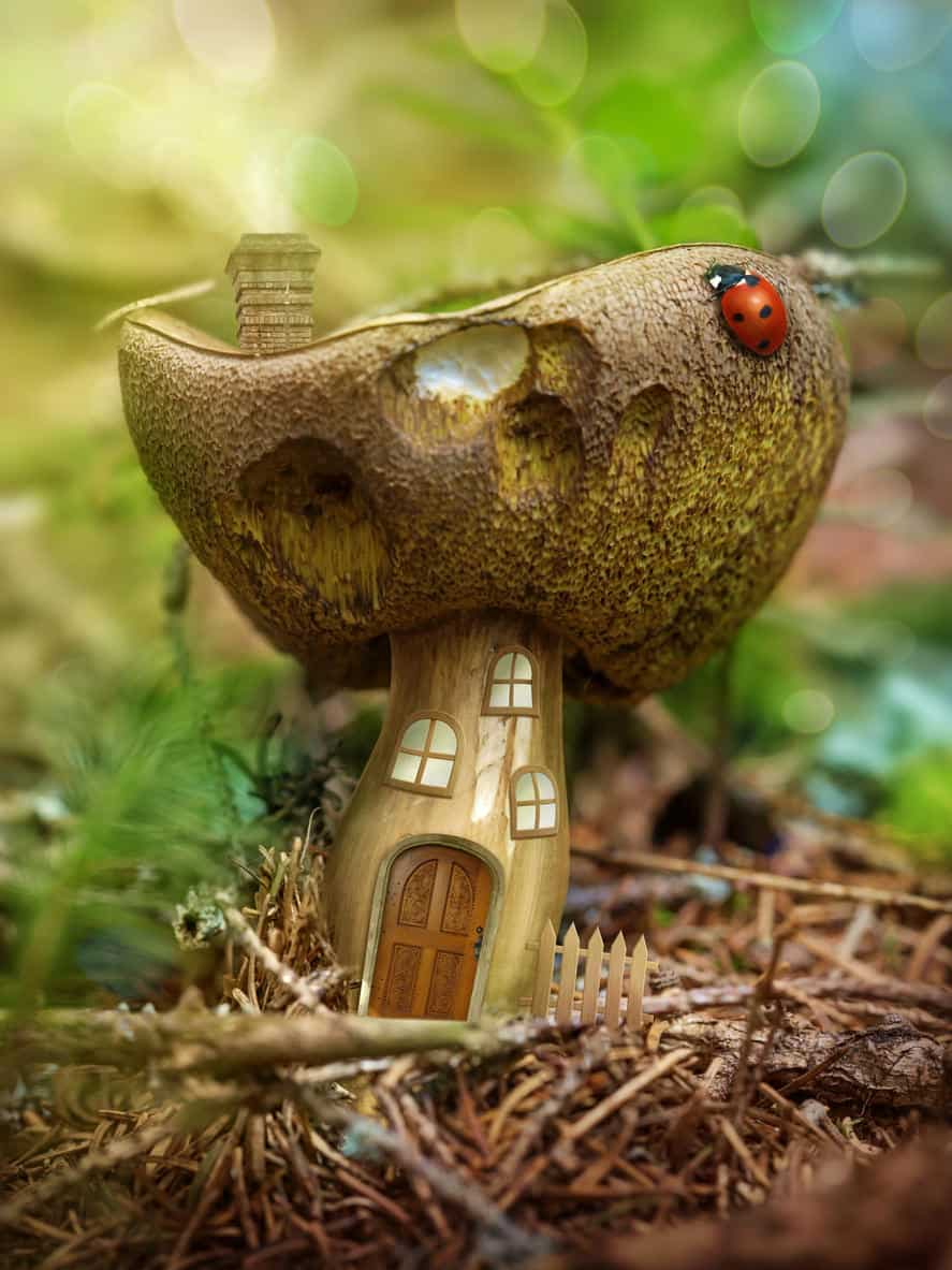 Fantasy mushroom house in the forest. I love this fun fairy house. It would make a great collection to any fairy garden.