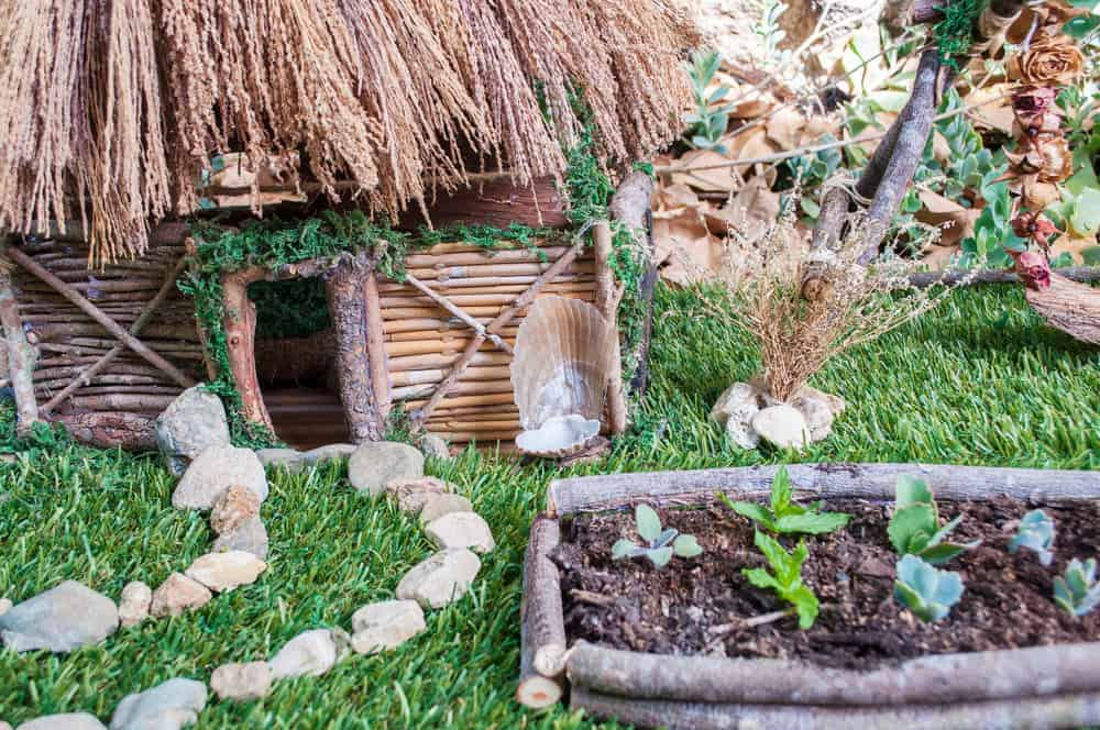 Close up of an entire fairy garden scene with thatched roof house built log-style with sticks, pebble walkway, miniature raised garden beds and small treees.
