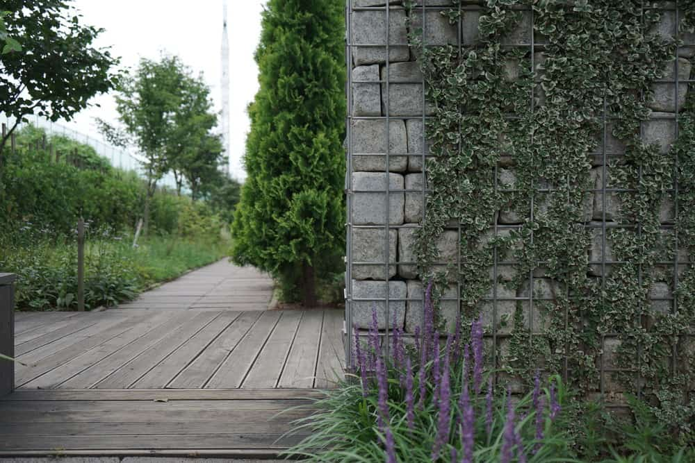 Large cobblestone gabion wall with ivy.