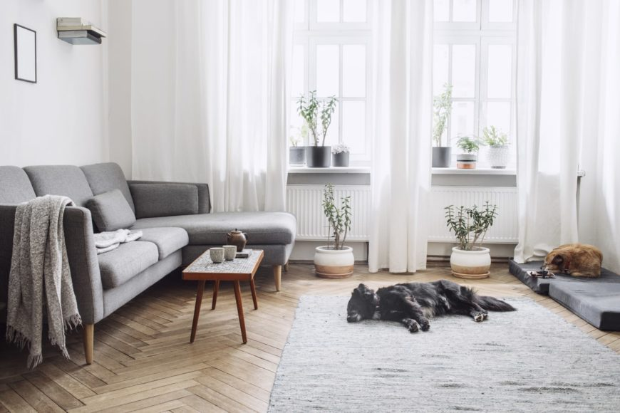 A Scandinavian-Style living room featuring herringbone-style hardwood flooring topped by an area rug. The room offers a modish sofa along with white window curtains.