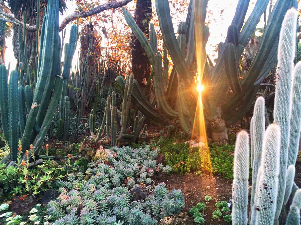 Tall cacti among small succulents in semi-desert landscape.