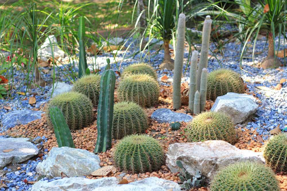 I love how the rocks make up the garden here - combination of blue and red rock with various cacti planted sporadically and then also decorated with a variety of a large rocks.