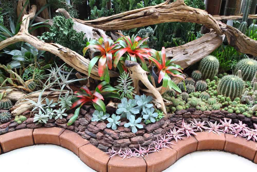 Beautifully arranged succulent garden with gnarly tree branches. The garden is nicely edged with red brick.