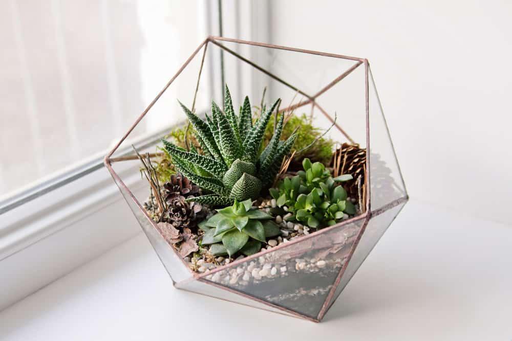 Succulent terrarioum in interesting all-glass terrarium.
