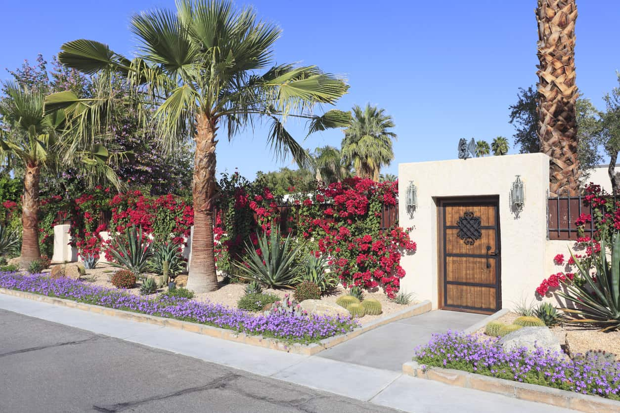 Colorful garden outside in front of adobe style house. Arid desert plants including cacti,Bougainvillea and palm trees.