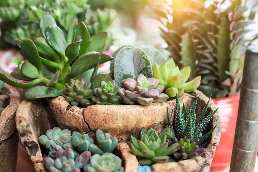 Tiered succulent planter garden.