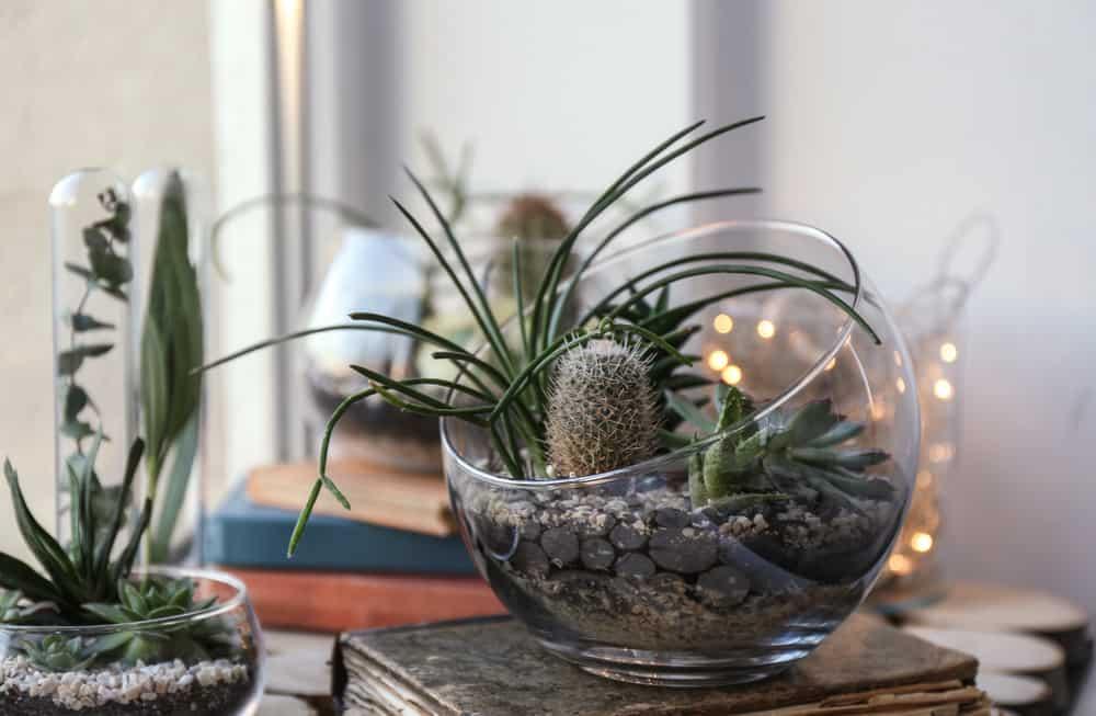 Open-topped succulent glass terrarium decoration.