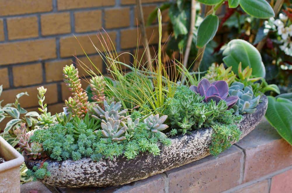 Succulent and grass garden in old curved wood planter sitting on a brick wall.