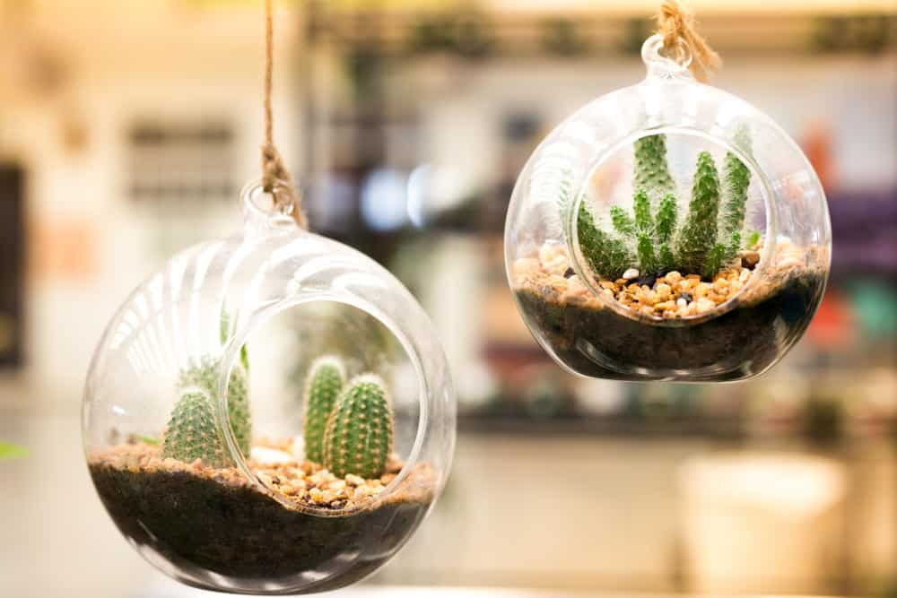 Hanging glass spherical cacti terrariums.