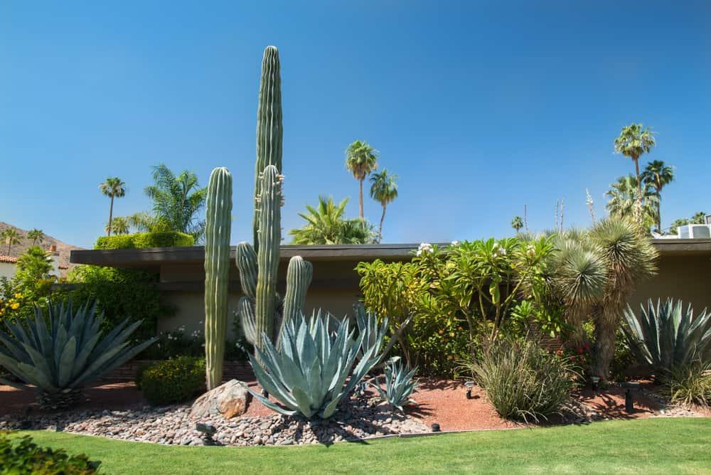 Cacti garden in front yard of single story desert house.