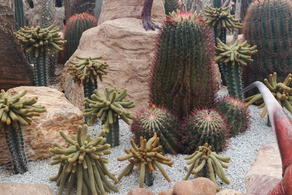 I love the presentation of the large rocks creating a framed bed for the cacti garden on crushed light gray rocks.