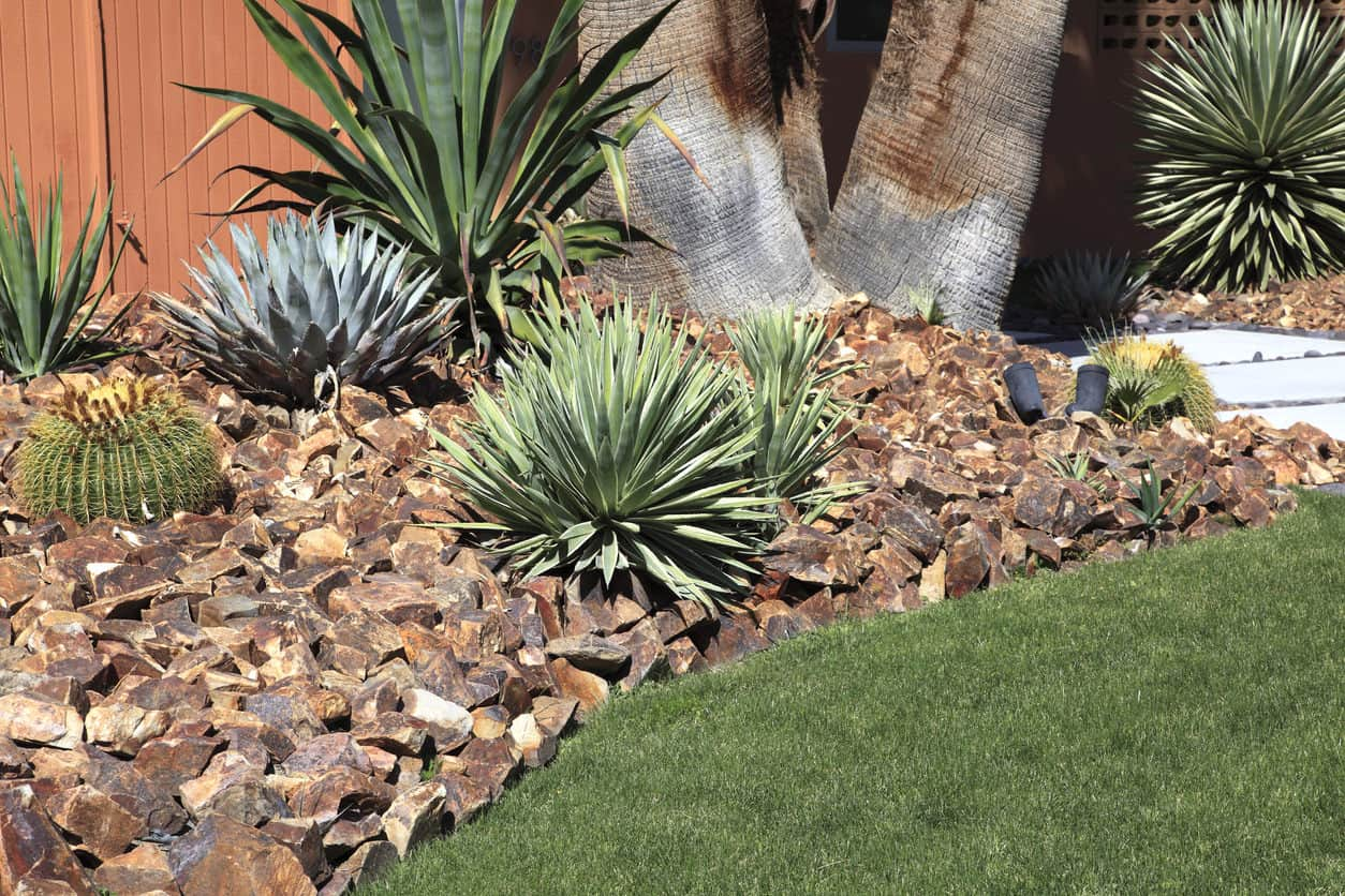 Beautiful xeriscaped garden of cacti,succulents and large brown color rocks.