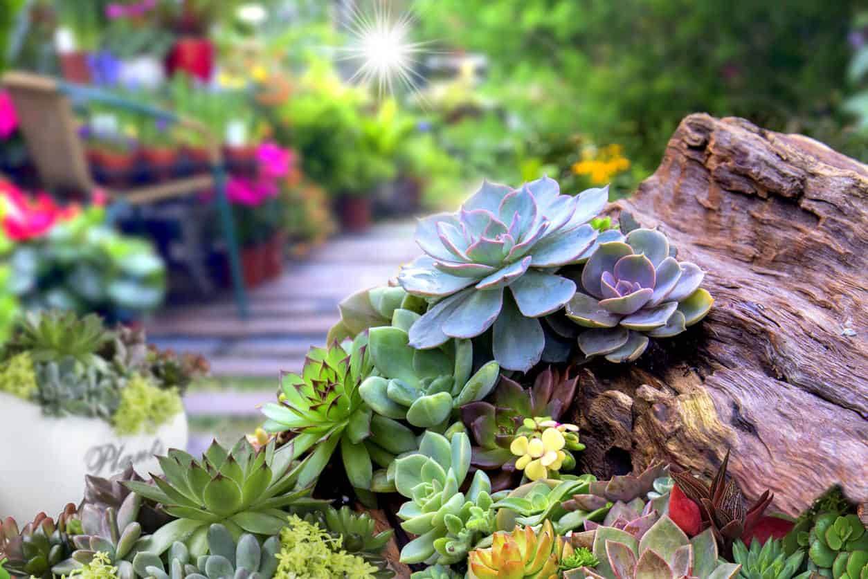 A variety of succulents planted in and around old stump planter.