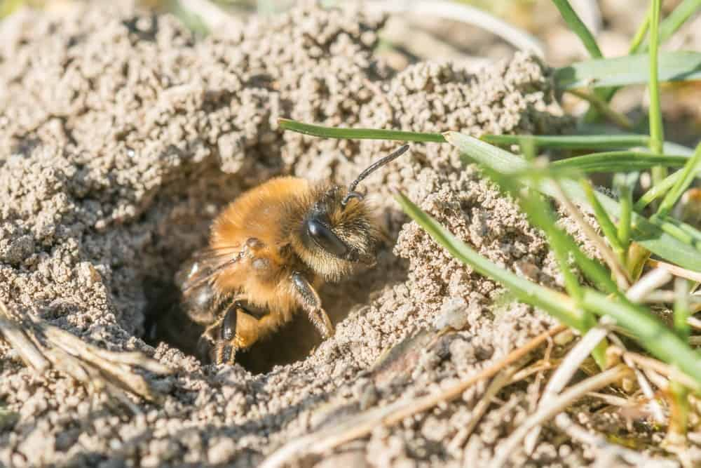 A Mining Bee
