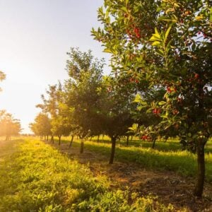 A beautiful orchard
