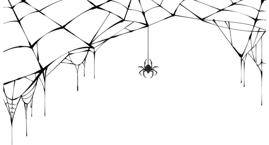 A Spider and its web