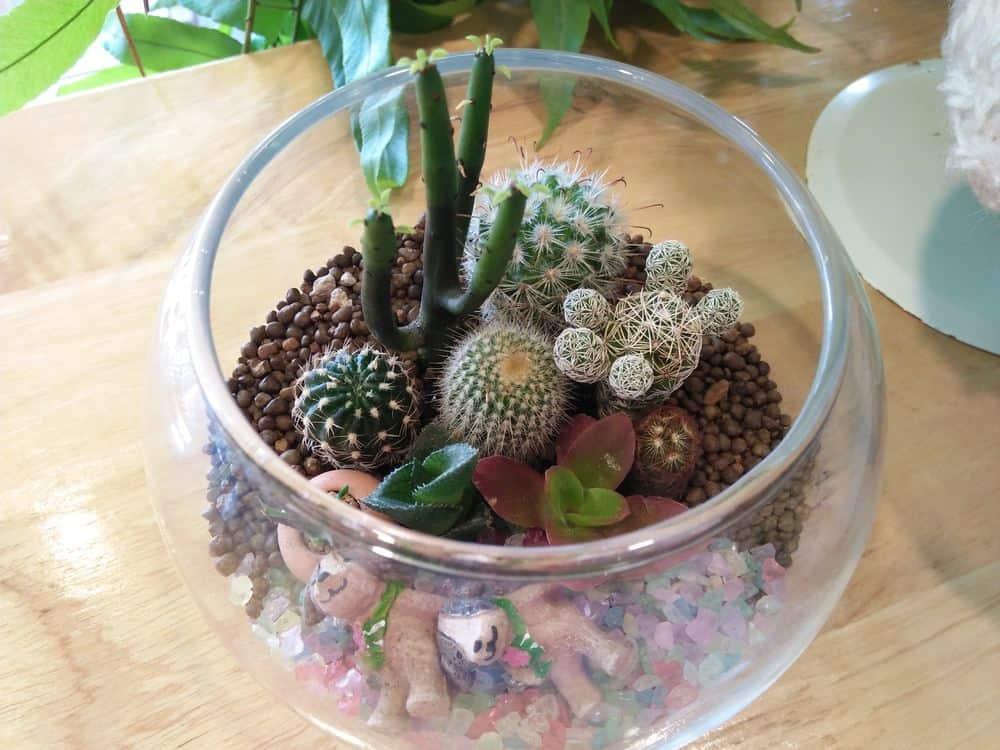 Completed DIY succulent terrarium
