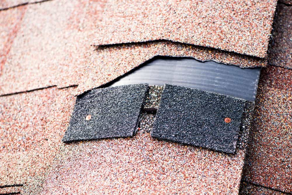Damaged shingle on roof