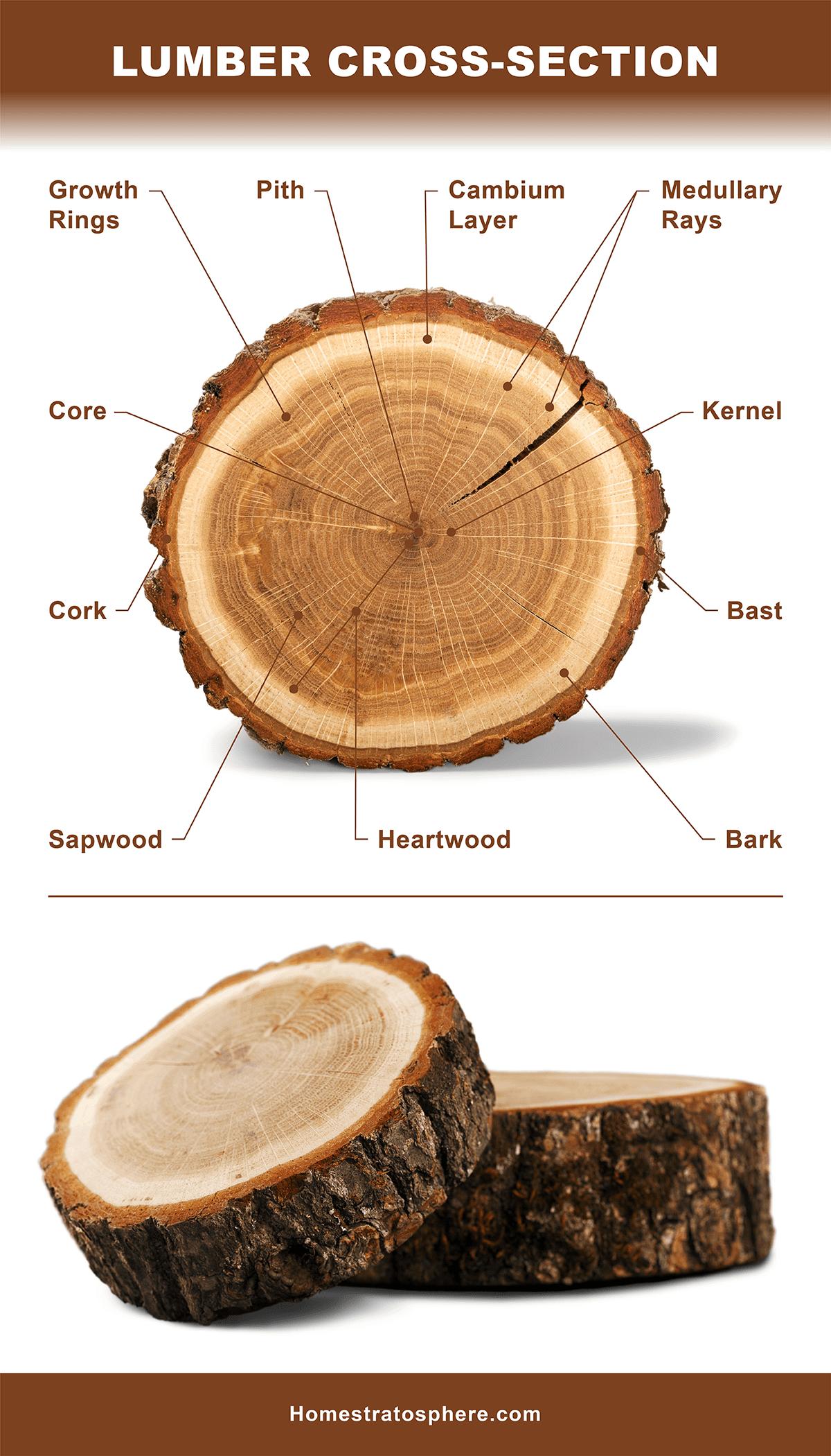 Lumber Cross-Section